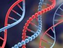Investigadores revelan gen que provoca desorden cerebral